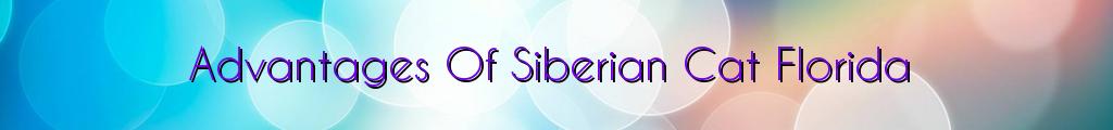 Advantages Of Siberian Cat Florida