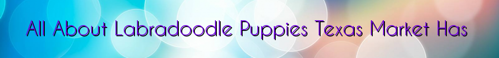 All About Labradoodle Puppies Texas Market Has