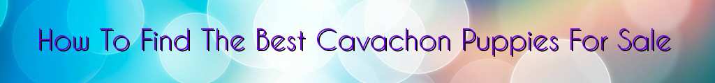 How To Find The Best Cavachon Puppies For Sale