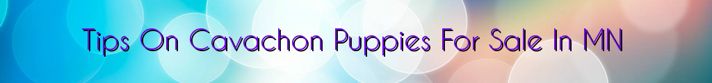 Tips On Cavachon Puppies For Sale In MN