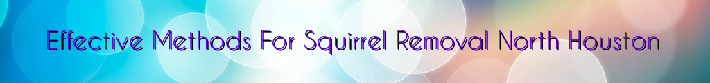 Effective Methods For Squirrel Removal North Houston
